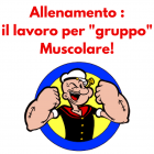 lavoro gruppo muscolare