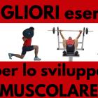 migliori-esercizi-sviluppo-muscolare